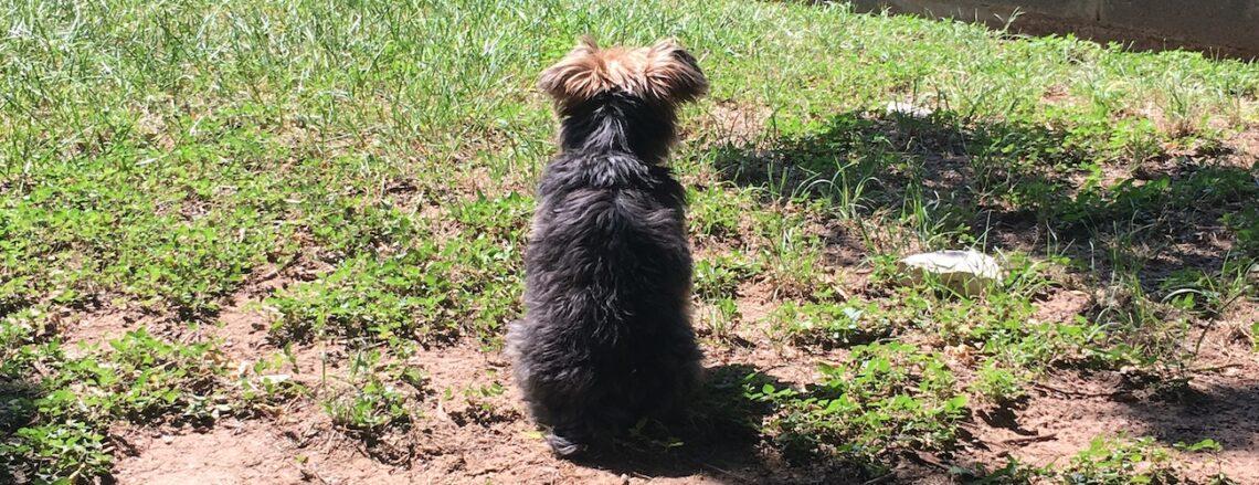 Hildy in the backyard